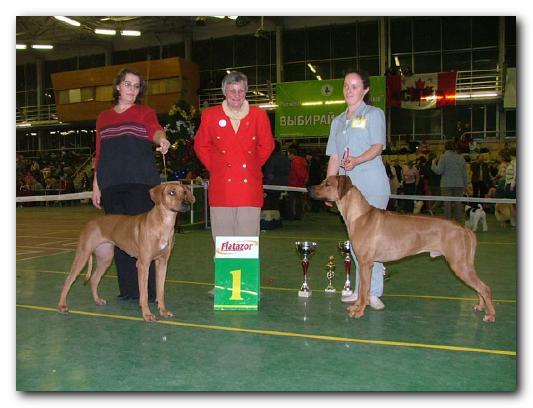 Родезийский Риджбек - Собаки или все о собаках на
