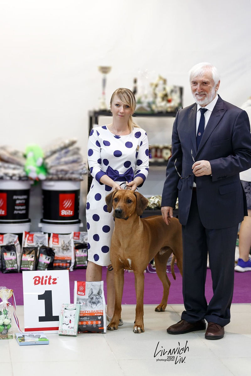 Rhodesian ridgeback Ridge's Star Ricardo Great